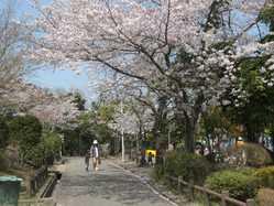 上野ヶ丘墓地公園の画像