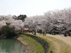 亀池公園の画像
