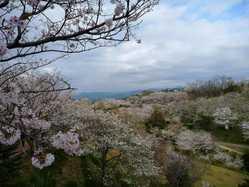 平草原公園の画像