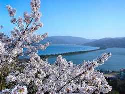 傘松公園の画像