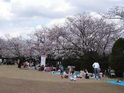 RSKバラ園の画像