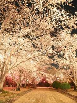 早島公園の画像