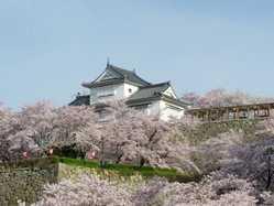 津山城(鶴山公園)の画像