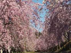 たけべの森公園の画像