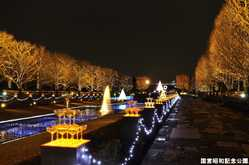 国営昭和記念公園Winter Vista Illuminationのイルミネーション