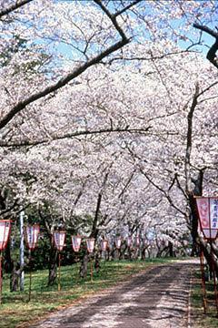 県立芦野公園