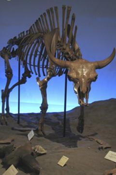 奥州市牛の博物館