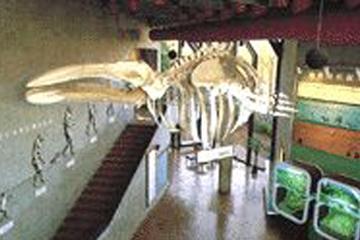 市立市川考古博物館