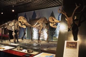 明石市立文化博物館の画像