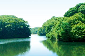 緑の文化園