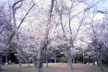 城山公園:浜田市