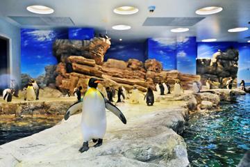 下関市立しものせき水族館海響館