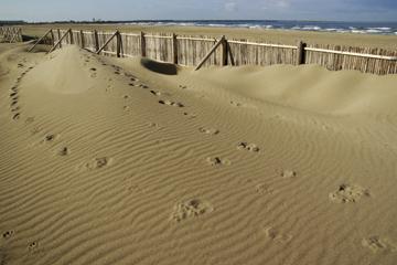 内灘砂丘の画像