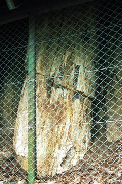 藤里の珪化木