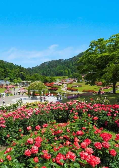 東沢バラ公園の画像