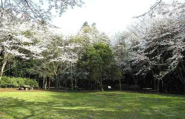 五本松公園の画像