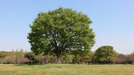 庄内緑地グリーンプラザの画像