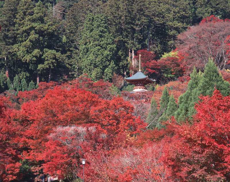 勝尾寺の画像