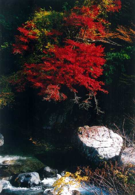 椎葉渓谷の画像