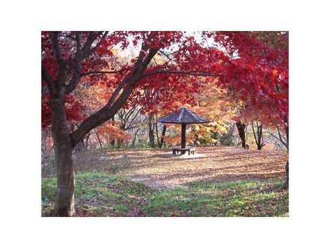 宮城県県民の森の画像