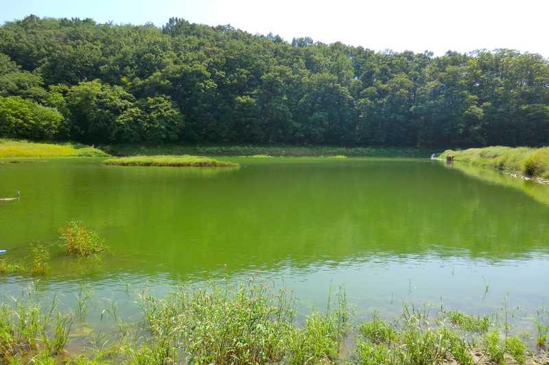 竜華池(藤川支流)の画像