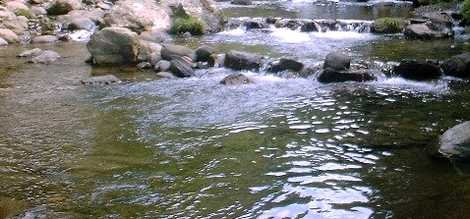 谷太郎川ます釣場の画像