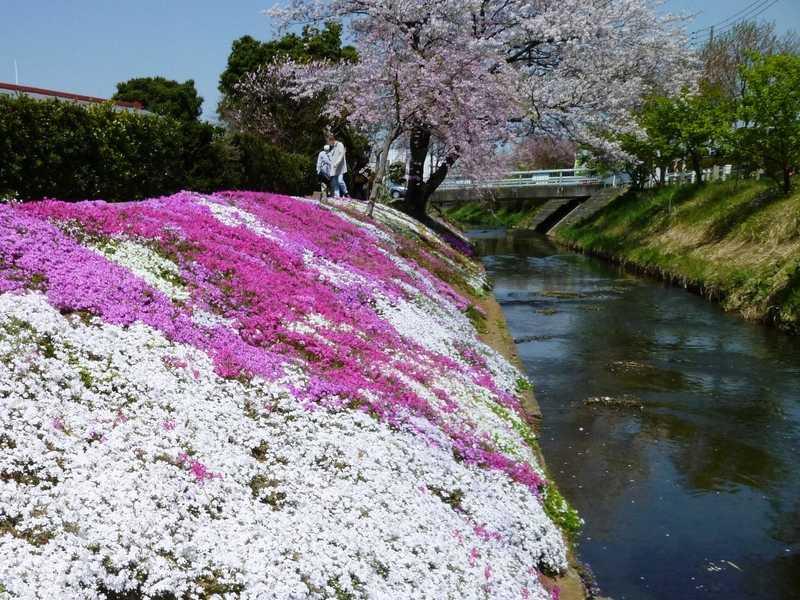 渋田川河畔の画像