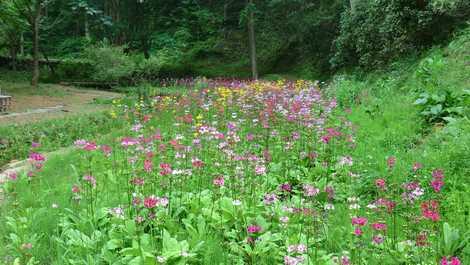 九十九谷森林公園の画像