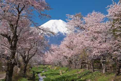 忍野村より富士山 新名庄川の画像