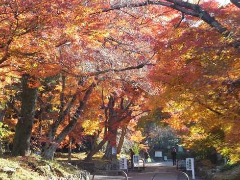 鷺森神社の画像
