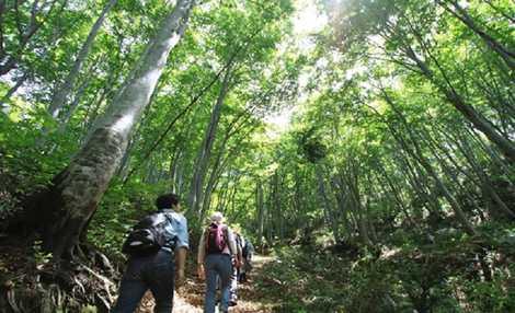 平丸ふれあいの森の画像