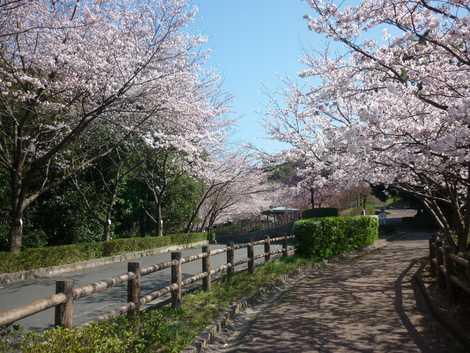 桑山公園の画像
