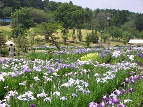 みなみかた花菖蒲の郷公園の画像