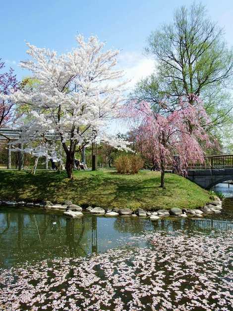 中島公園の画像