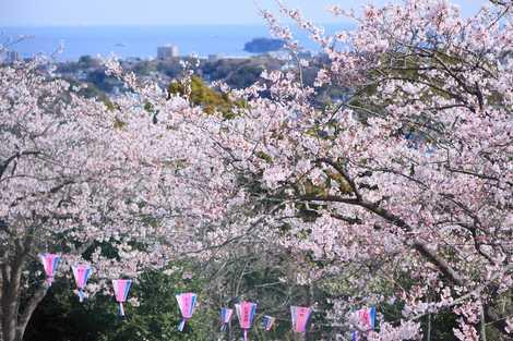 衣笠山公園の画像