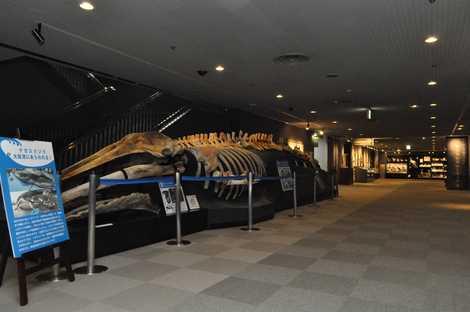 人 と 博物館 自然 の 兵庫 県立
