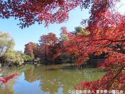 石神井公園の画像