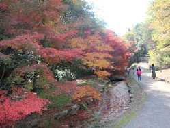 みやま公園の画像