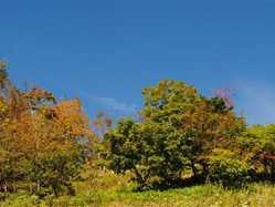入笠山の画像