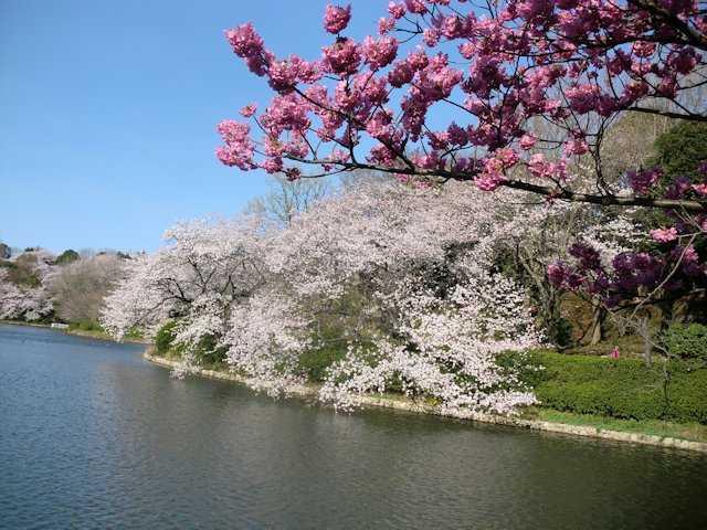 県立三ツ池公園