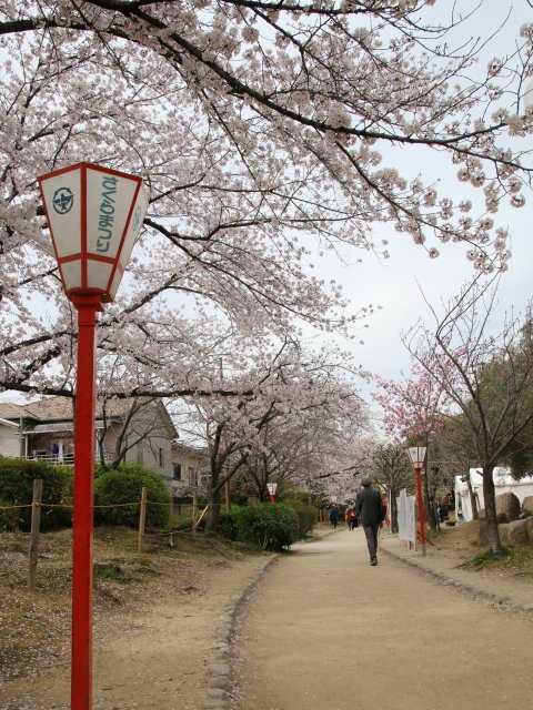 元茨木川緑地の桜の開花・見頃情...